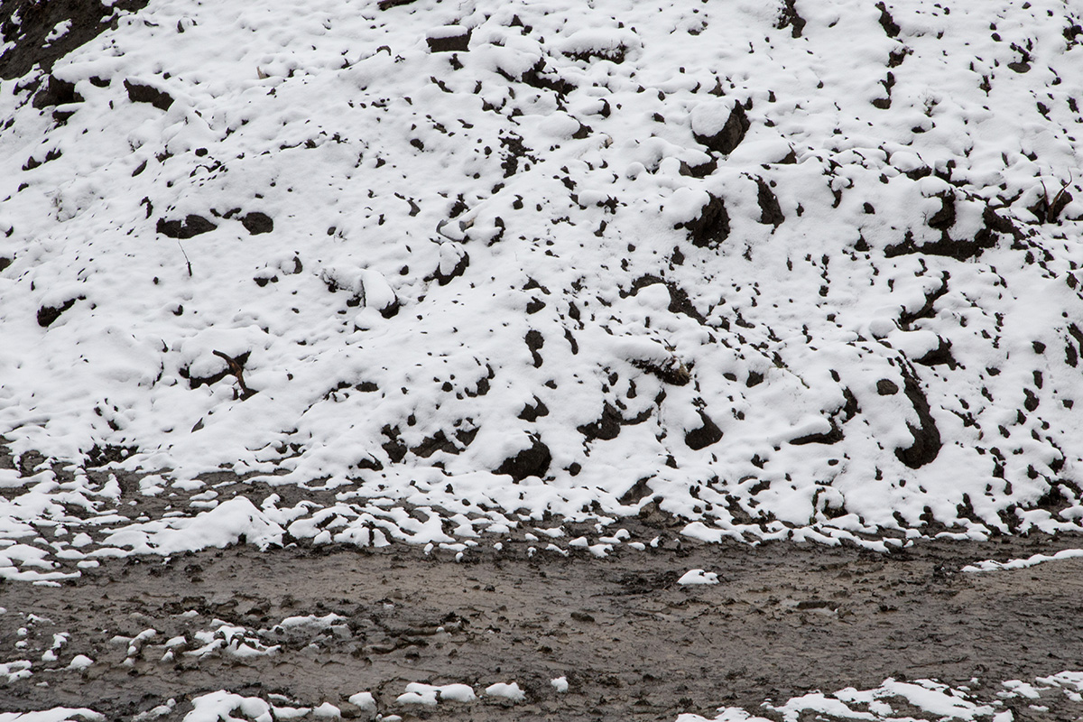 1050-Joshua-Storie-Snowfall-18