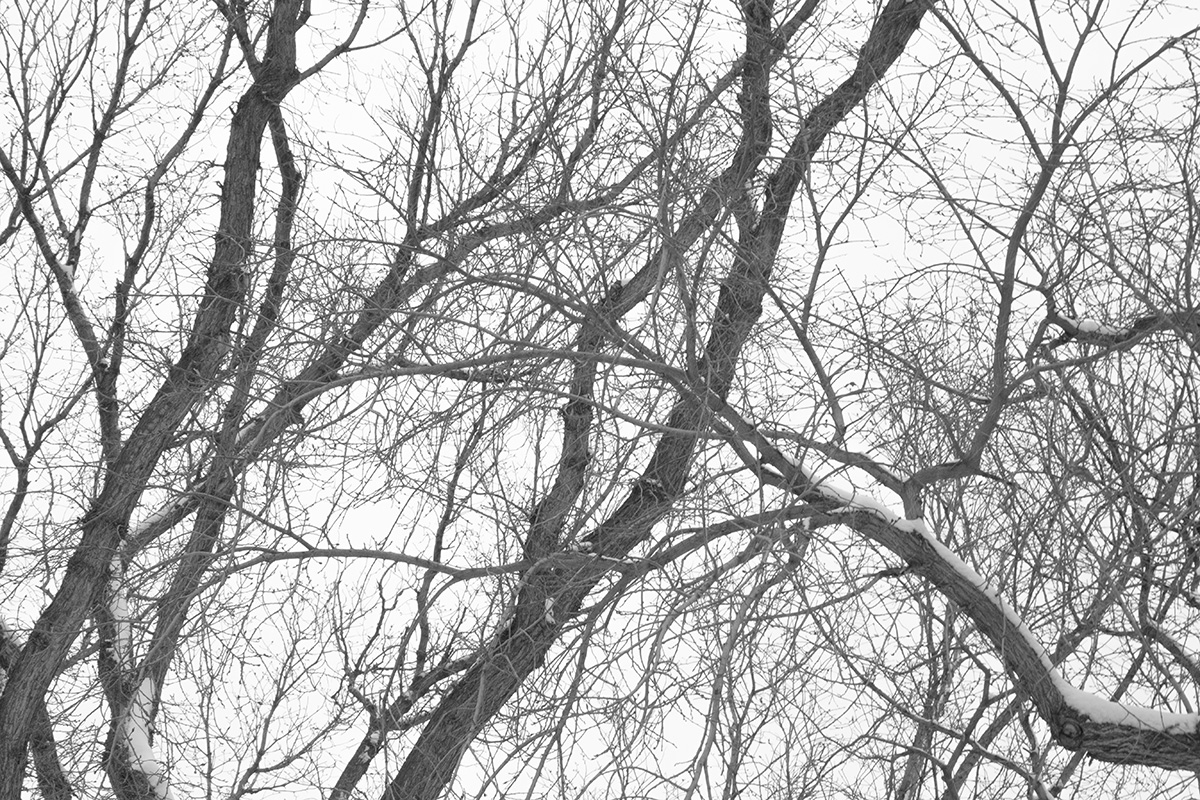 1050-Joshua-Storie-Snowfall-20