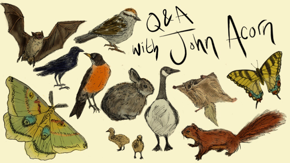 An illustrated guide to campus wildlife in spring