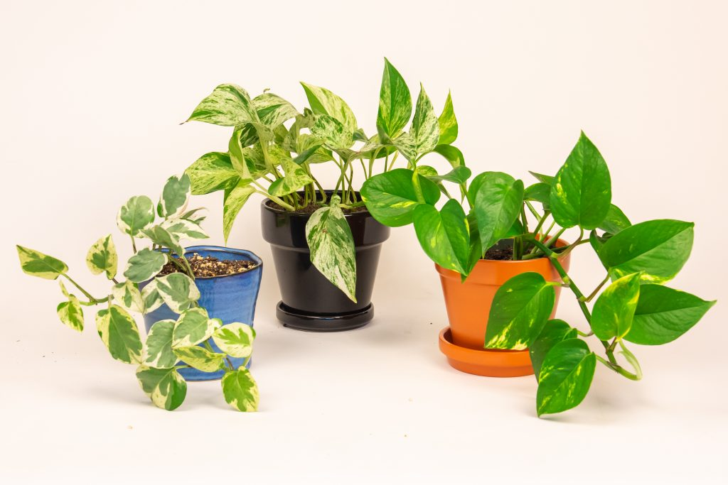 Top 5 Indoor Plants For University Students The Gateway